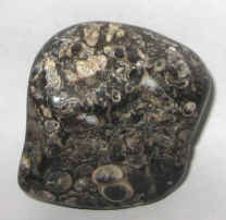 Turritella Agate Fossil Specimens For Sale